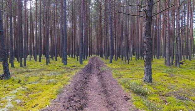 community-adaptation-landscape-resilience